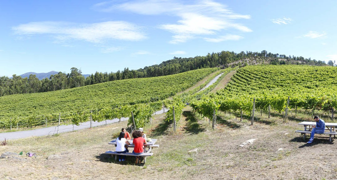 Fotografías Denominación de Origen Vinos de Galicia
